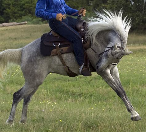 Gallop Poll: Ever Been On Bucking Horse? - Horse&Rider