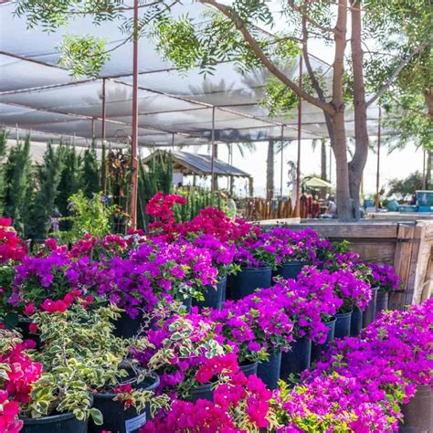 Tree and Plant Nursery, Landscape Design and Installation