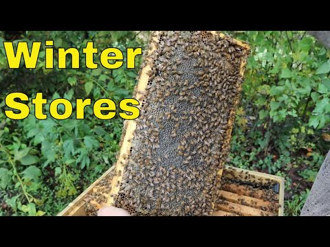 Where Do Bees Live | Bee Colonies | DK Find Out