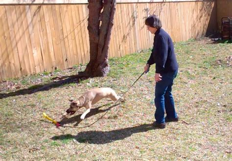 Dog Behavior Digest: Dogs Need Exercise, Play and Mental