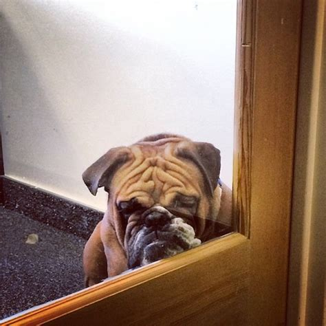 15 Facts About Dogs That Only Dog Owners Will Totally Get