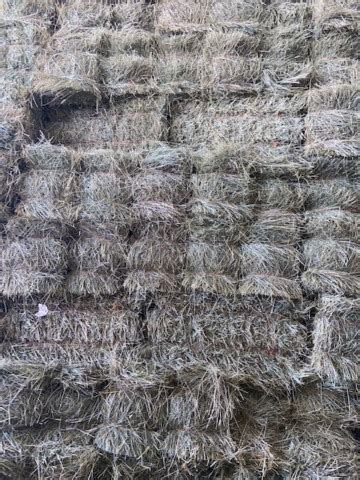Horse hay for sale: Small Square bales Timothy