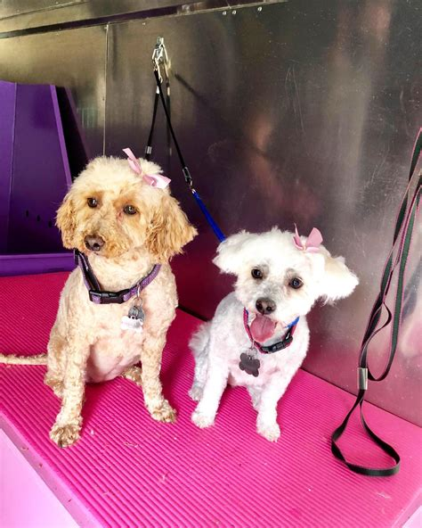 Lilly's Mobile Grooming - Home   Facebook