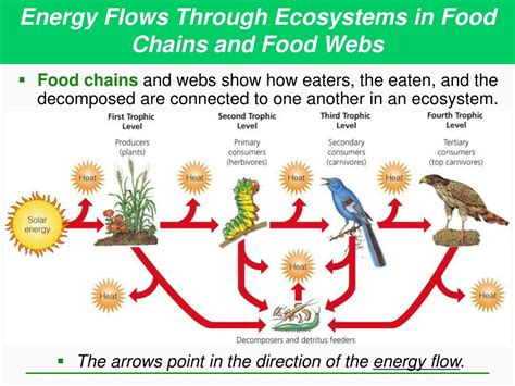 PPT - Ecosystems: What Are They and How Do They Work