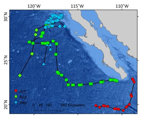 Two-year migration of adult female white sharks