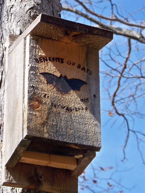 Bat House Plans - Tips For Building A Bat House And