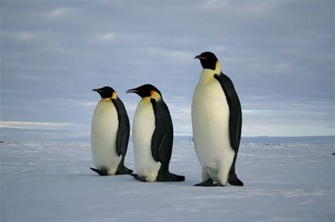 Penguins 101: 10 Fun Facts About Penguins for Kids #