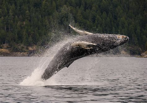 Pacific Ocean Whale Migration Photography Workshops
