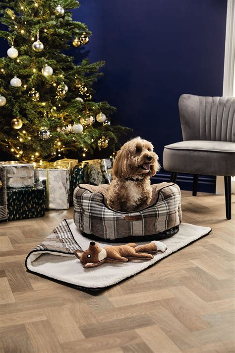 Aldi 'Santa Paws' Pet Collection Available In Stores From
