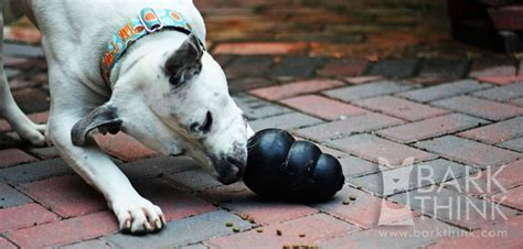 How to Clean & Sanitize KONG Dog Toys - Bark Think