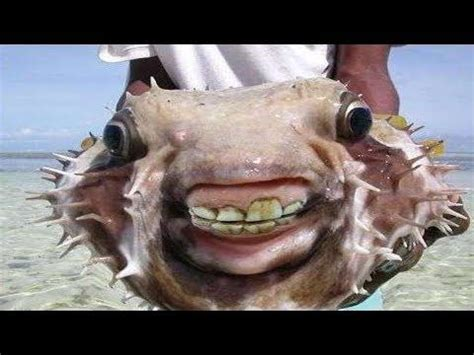 9 Small Fish That Do Serious Damage | Weird sea creatures