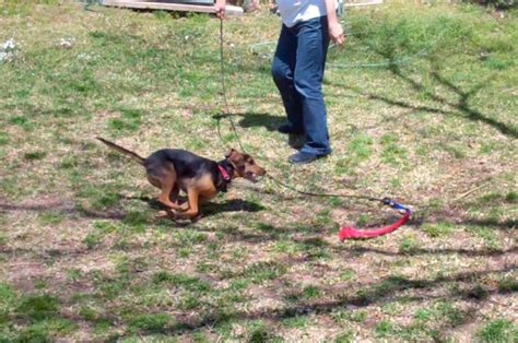 7 Great Benefits of Flirt Pole Play for You and Your Dog
