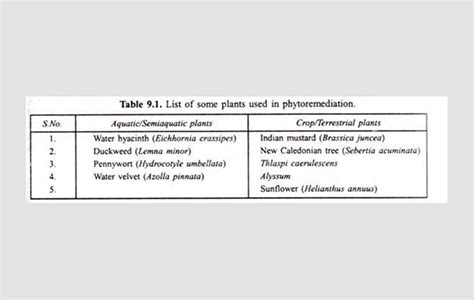 River Purification – Using Plants in Phytoremediation Process